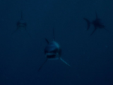 Mako Shark (Deep Blue Sea)