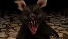 Plagued Rat