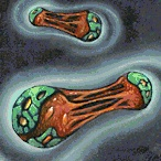 File:Molecular Bonding.jpg