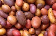 330px-Patates
