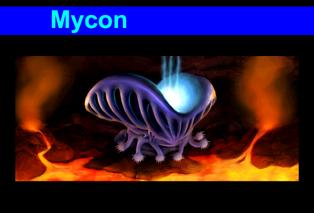 Mycon