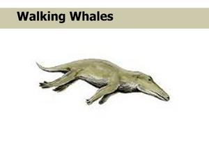 Walking Whales
