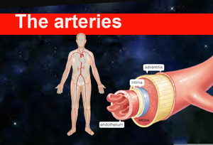 The arterie