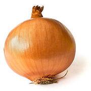220px-Onion on White