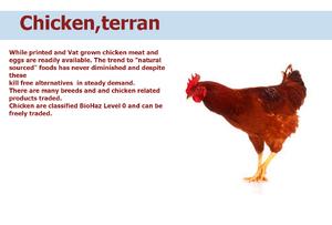 Chicken terran