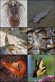 300px-Arthropoda