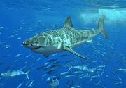 Terran Great White Shark