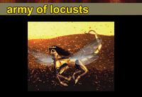 Army of locusts