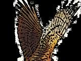 Peace Hawk Movement