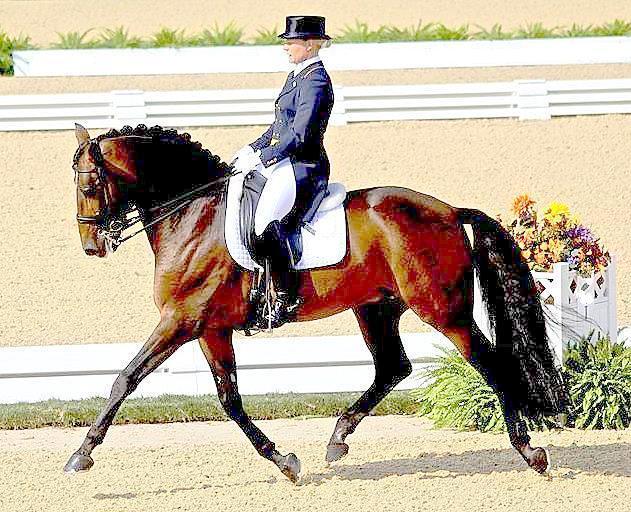 English Riding Disciplines Galnet Wiki Fandom Powered