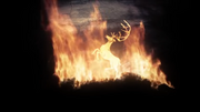 Cerf dans les flammes
