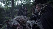 Eddard decouvre les loups(1x01)