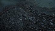 L'armée Arryn détruit l'armée Bolton