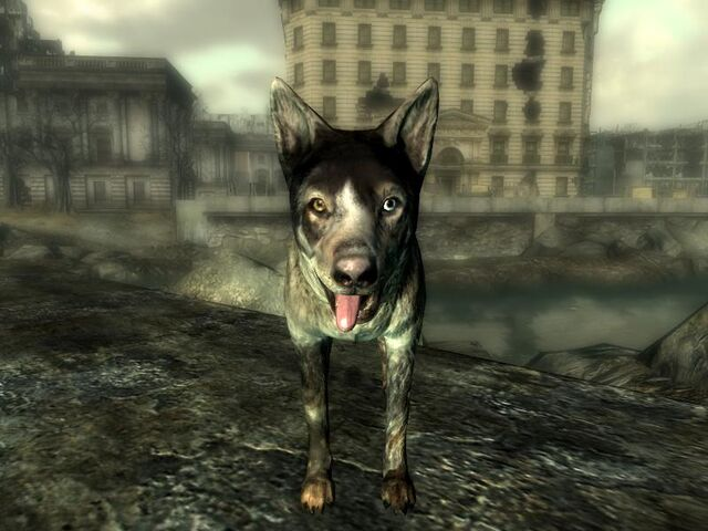 File:GSP-FFP-Dogmeat.jpg