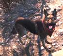 Dogmeat (Fallout 4 Pimps)