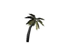 AddAThing OutdoorItems Palm