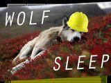 Wolf Job