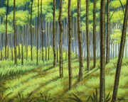 Forest (ons)