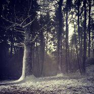 Belfast-snow