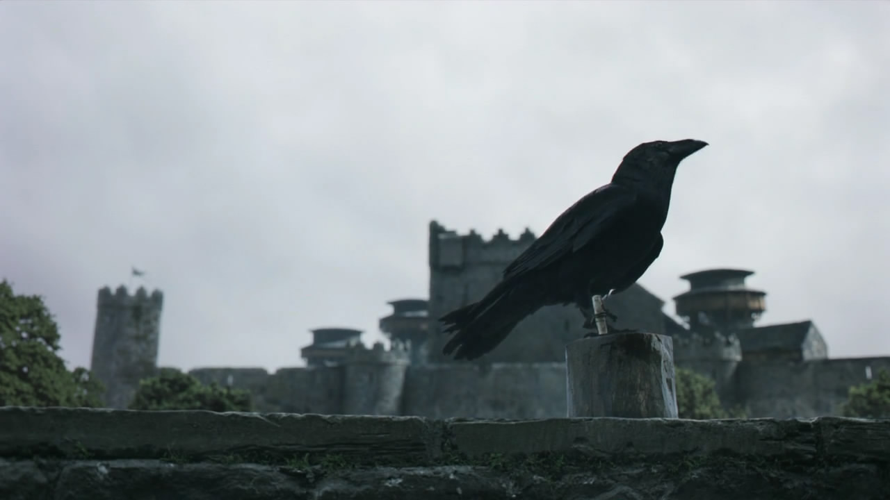 Ravens Game Of Thrones Wiki Fandom Powered By Wikia