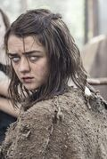 Arya the red woman infobox