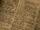 Shiera Seestern