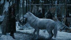 202ProfilSchattenwolf2