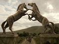 Dothraki portal