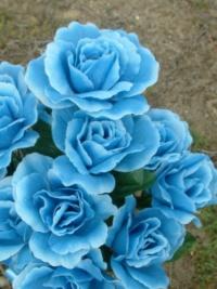 Rosa azul de inverno