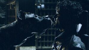 609 Ramsay Hund Tod