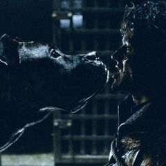 Ramsay Bolton wird von seinen Hunden zerfleischt