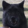 Famtree-Shaggydog