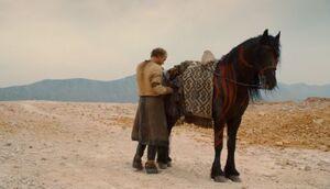 202 Jorah Pferd