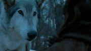 Nymeria Stormborn