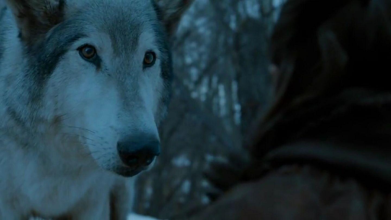 Nymeria (direwolf) | Game of Thrones Wiki | FANDOM powered