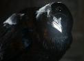 Raven-Portal