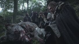 Mother of direwolves