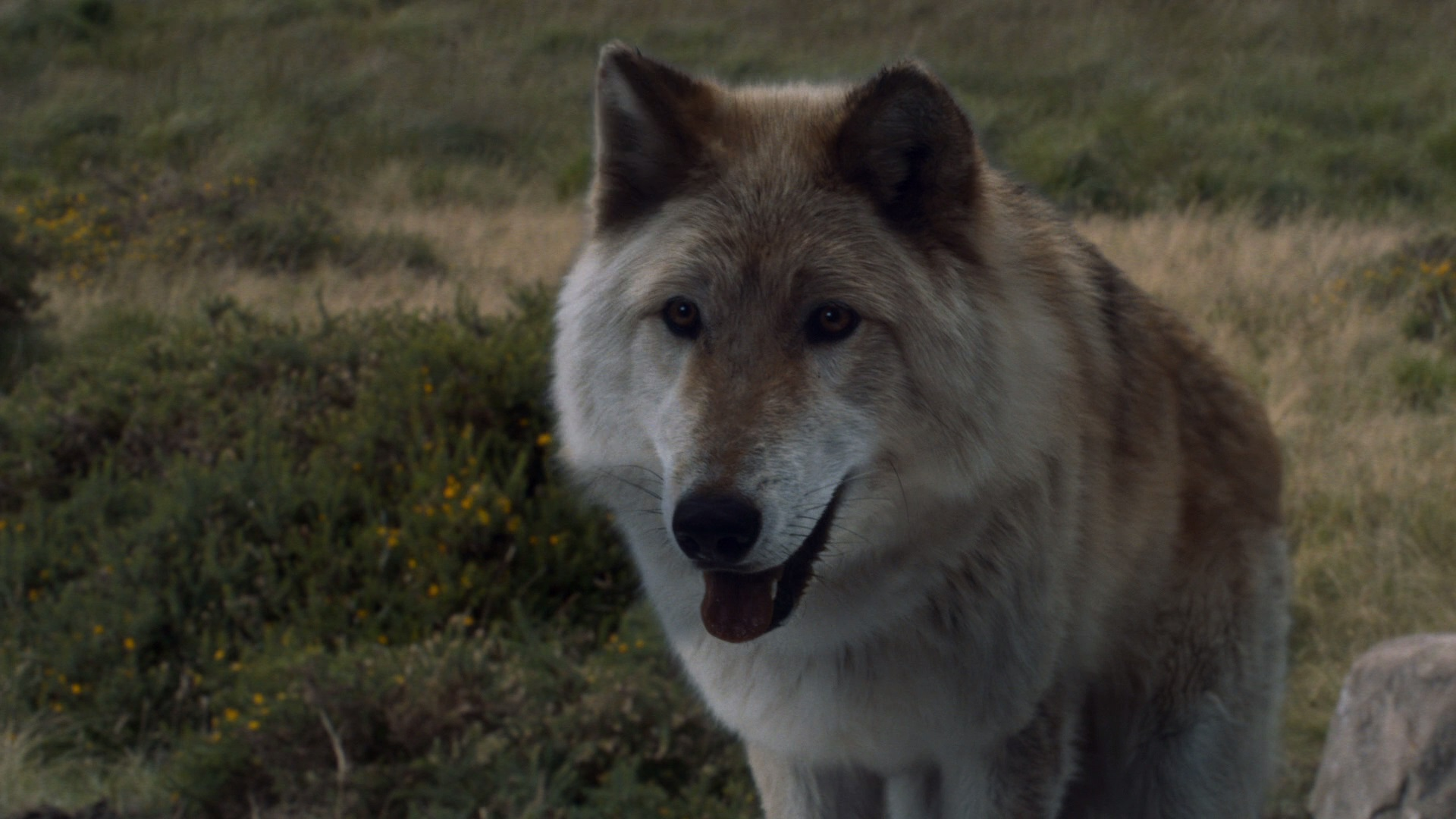 Animals and Plants | Game of Thrones Wiki | Fandom