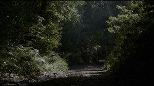 407 DieSpotdrossel Brienne Podrick
