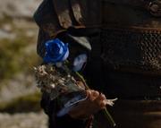 Dusk Rose