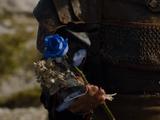 Сумеречная роза