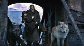 Bran, Hodor, Summer and Shaggydog