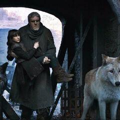 Verão e Cão Felpudo examinam a destruição de Winterfell.