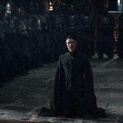 Petyr kniet vor Sansa nieder