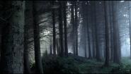 Wolfswoodpic1
