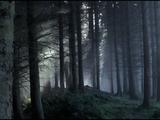 Wolfswood