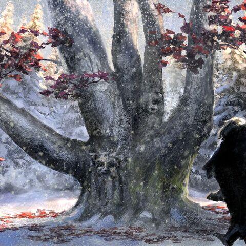 Wehrholzbaum jenseits der Mauer von <i>Kimberley Pope</i>