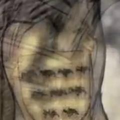 Símbolo da Casa Whent nos bônus 'História e Tradição' da 2ª temporada, com os morcegos dispostos em um padrão 4-3-2, assim como nos livros.