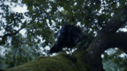 Three-eyed raven on a tree