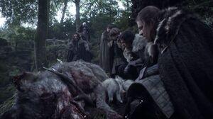 101 Fund des toten Schattenwolfes